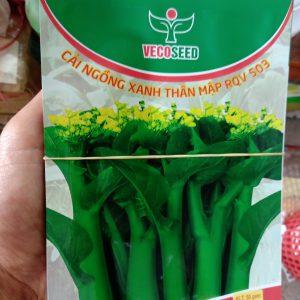 Hạt giống cải ngồng xanh